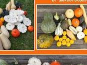Comment cuisiner Courges Recettes faciles, originales savoureuses nouveau livre