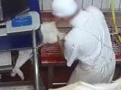 nouvelle vidéo montre pratiques révoltantes barbares