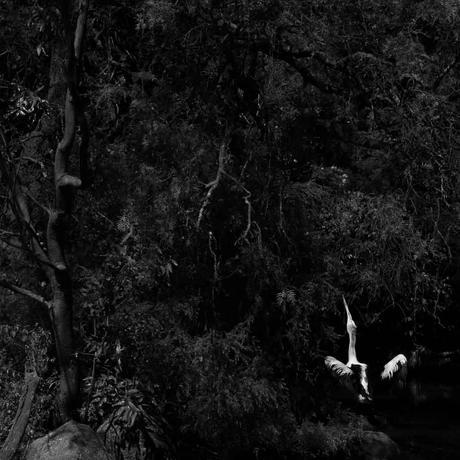 katrin-koenning_photography_indefinitely_the-crossing