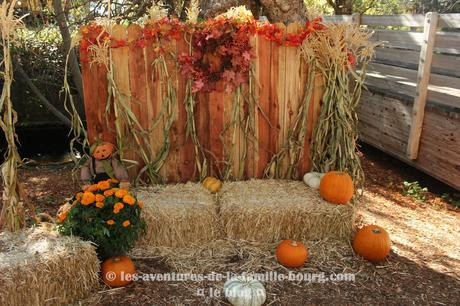 Un mini Pumpkin Patch à Folsom