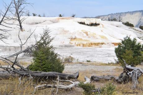 Itinéraire pour découvrir le parc national de Yellowstone en 4 jours