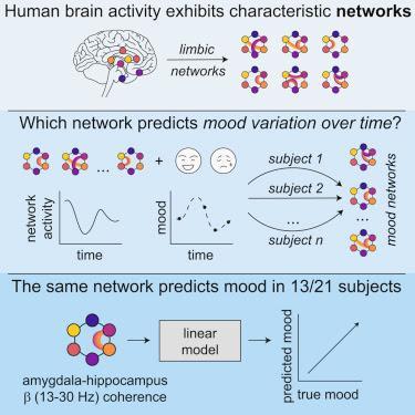 #Cell #humeur #amygdala #hippocampe #réseau Un sous-réseau Amygdala-Hppocampe code pour les variations d'humeur chez l'homme