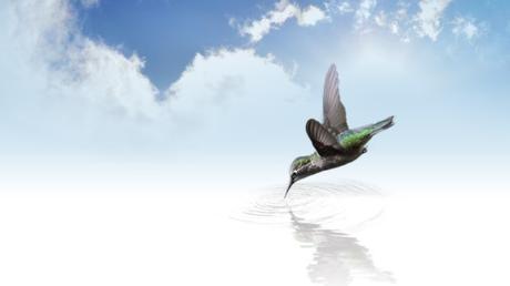 La parabole du colibri