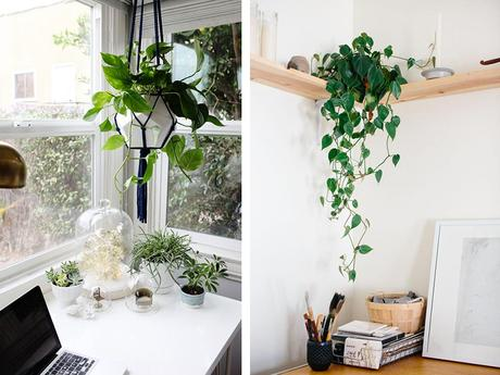 aménager son bureau plantes