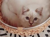 ANIMAUX Tout qu'on nous chats… mais dont doutait