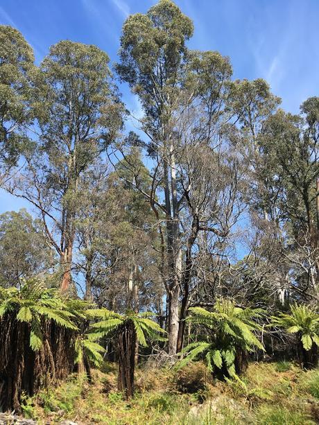 Tasmania - Lorinna