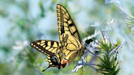 Quels sont les insectes pollinisateurs ?