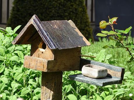 jardinrosierjosephmagneretparisenfranceaussibuccolique