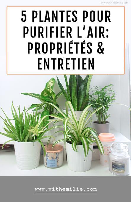 5 Plantes pour Purifier l'Air : Propriétés et Entretien