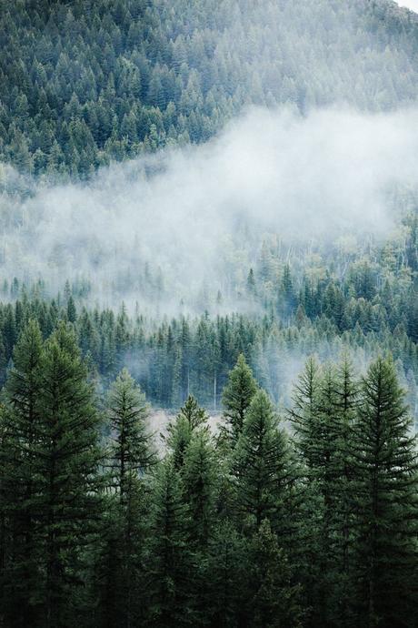 noël écologique décoration forêt de sapin arbre blog déco clem around the corner