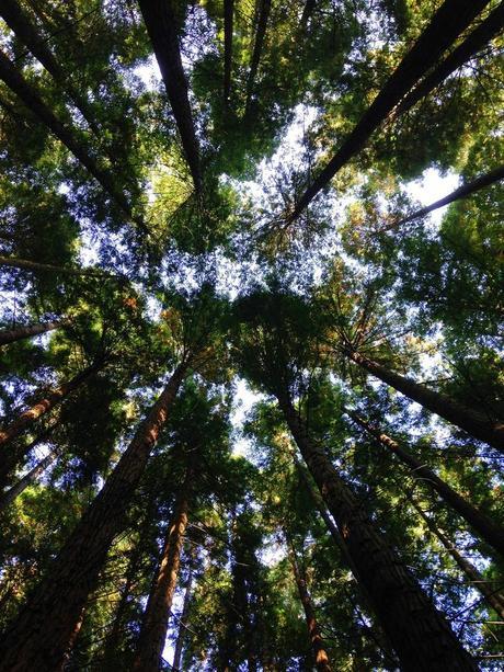 noël écologique décoration idée cadeau original arbre forêt blog déco clem around the corner