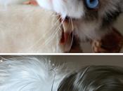 Xuedaixun s'amuse transformer animaux humains