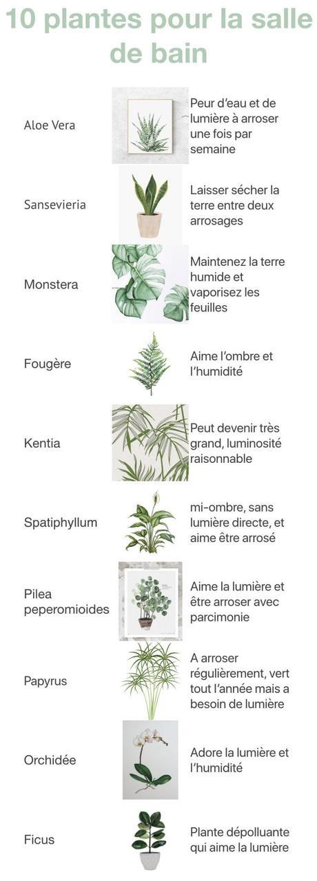 plante pour la salle de bain theme nature blog deco clem around the corner