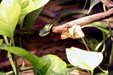 poison-serpent