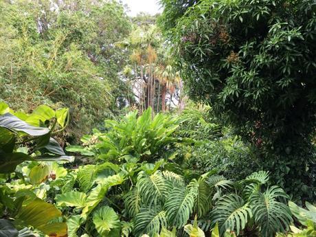 jardin_botanique_deshaie_guadeloupe_voyage_antilles_aklanoa_végétation_travalblog