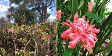 jardin-botanique-deshaies-guadeloupe-voyage-blog-roseporcelaine-travelblog
