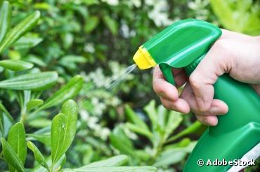 Les pesticides chimiques pour les jardiniers amateurs sont interdits depuis le 1er janvier 2019