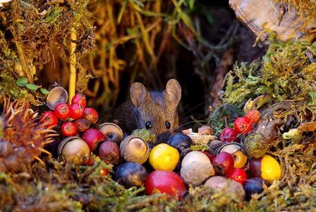 Il découvre des souris dans son jardin et décide de leur construire un village