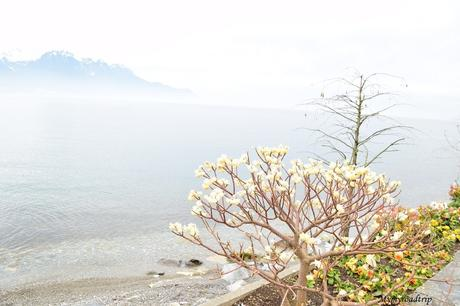 Un week-end spa & détente & visites à Montreux en Suisse
