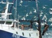 plan gestion l'Europe pour l'ouest méditerranée n'est adapté pêcheries notre littoral