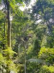 Laos – Gibbon Experience