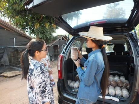 Udonthani : Visite du village aux champignons de Nong Tat « Le Garden Mushroom Udon. »