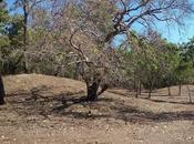 lieux sépultures aborigènes confirmés dans péninsule York Australie