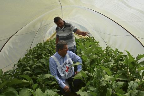 Travailler pour le CICR : Délégué «EcoSec»