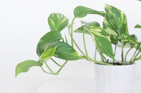 Des plantes gratuites ou pas chères | Mes astuces