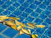 Comment bien choisir robot piscine
