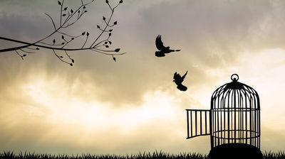 Liberté d'aimer