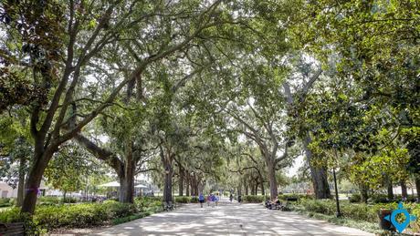 parc Forsyth Savannah