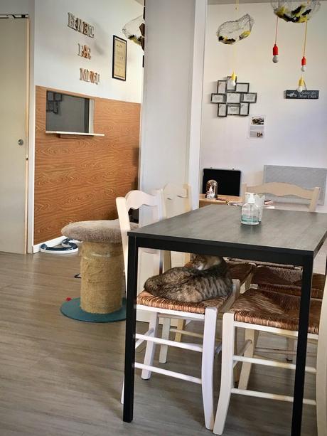 Le café des chats à HYERES