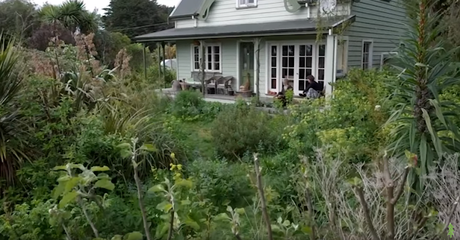 Un exemple de forêt nourricière en permaculture (vidéo)