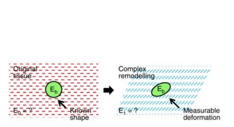 ÉPIDERMISATION et régénération tissulaire : Un véritable rapport de forces entre les cellules