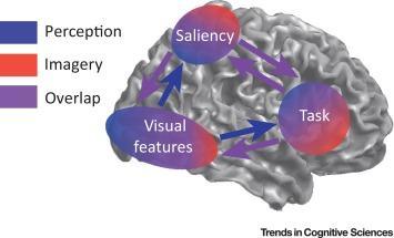 #trendsincognitivesciences #perceptionvisuelle #imagerievisuelle Mécanismes Nerveux Partagés de Perception et d'Imagerie Visuelles