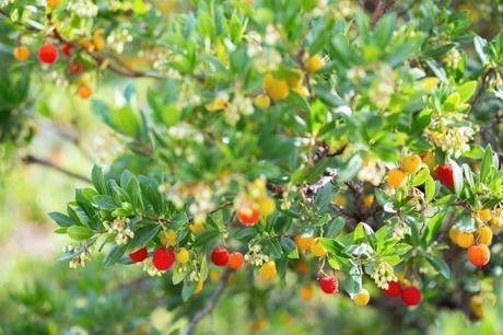 Les arbres fruitiers originaux à planter dans son jardin