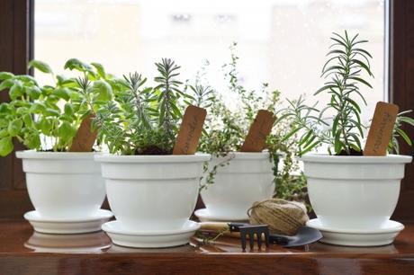 Comment planter des plantes aromatiques en pot?