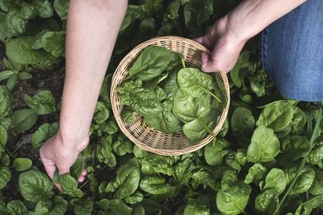 Les légumes perpétuels pour votre jardin potager