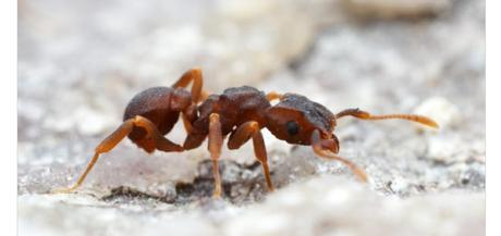 Et si les insectes faisaient de la prospection pour les chercheurs ?