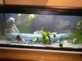 Mon nouvel aquarium