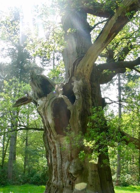 Projet 52: arbre