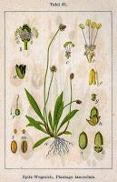Calmer les démangeaisons (varicelle, rougeole, piqûres d'insectes...)