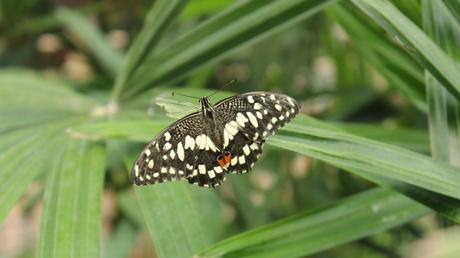 papillon_vannes_morbihan_blogvoyage