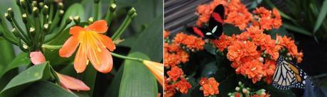 aklanoa_blogtropical_vannes_papillons_jardinauxpapillons_tropical_voyage_tourisme_morbihan