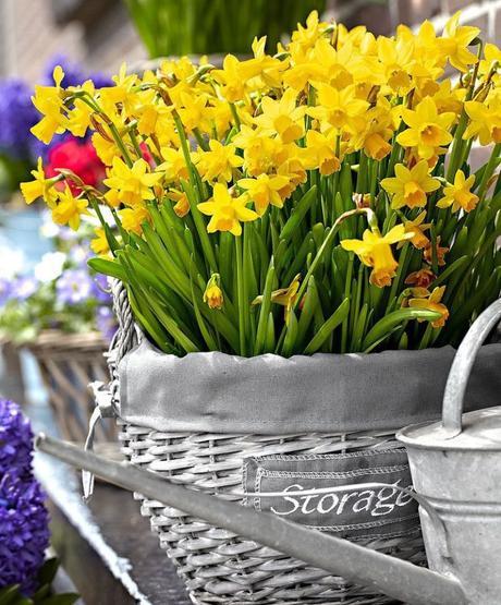 plante balcon ouest narcisse jaune bouquet osier gris - blog déco - clem around the corner