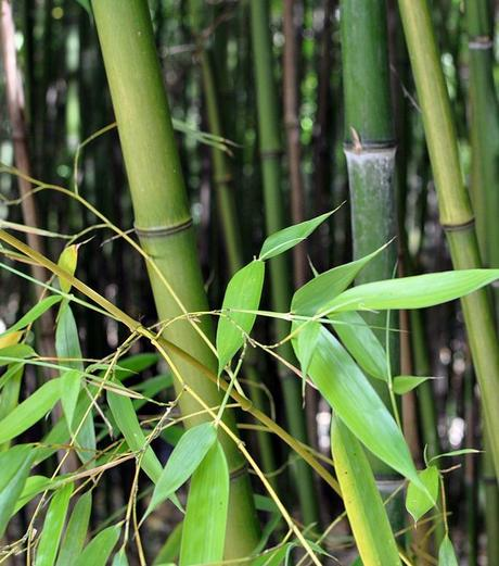 plante balcon ouest bambou forêt vert - blog déco - clem around the corner