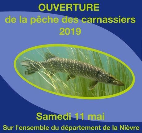 Ouverture 2019 carnassiers dans la Nièvre : samedi 11 mai