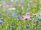 Semer jachere fleurie