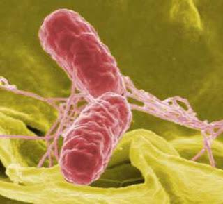 #thelancetinfectiousdiseases #infectiondusang #carbapenem Effet de la résistance au carbapenem sur les résultats d'un traitement d'une infection sanguine causée par les Entérobactéries dans des pays à bas revenus et à moyens revenus (PANORAMA) : étude ...
